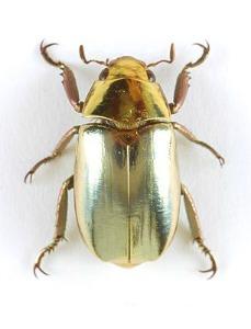 insekt123
